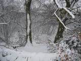 Wimberry Woods in winter