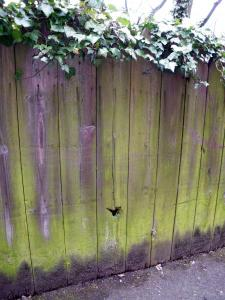 German bullet hole in Station Road fence