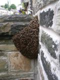 New Mills- Bee Swarm